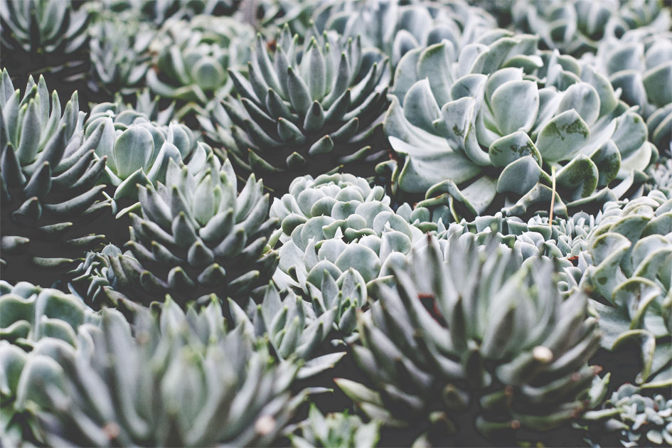 Links with love | succulents | chestnutandsage.de
