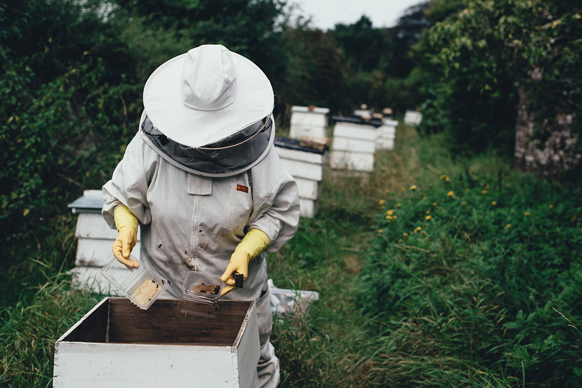 Beekeeper | Annie Spratt | unsplash.com