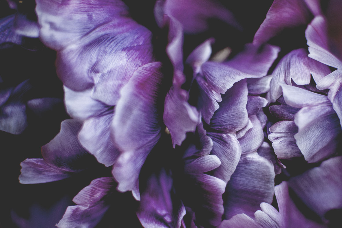 Tulpe | chestnutandsage.de