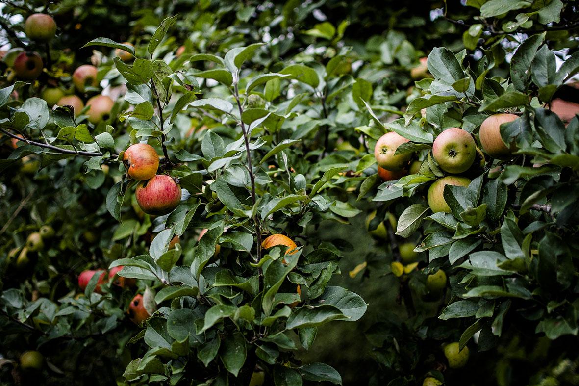 Sommer im Garten | chestnutandsage.de