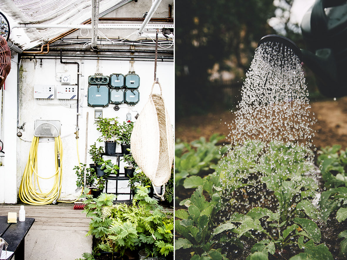 Rosendahls Greenhouse | chestnutandsage.de