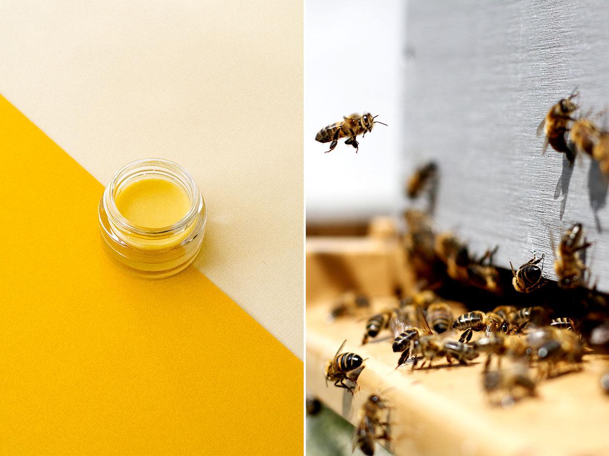 Lippenbalsam aus Bienenwachs selber machen | chestnutandsage.de
