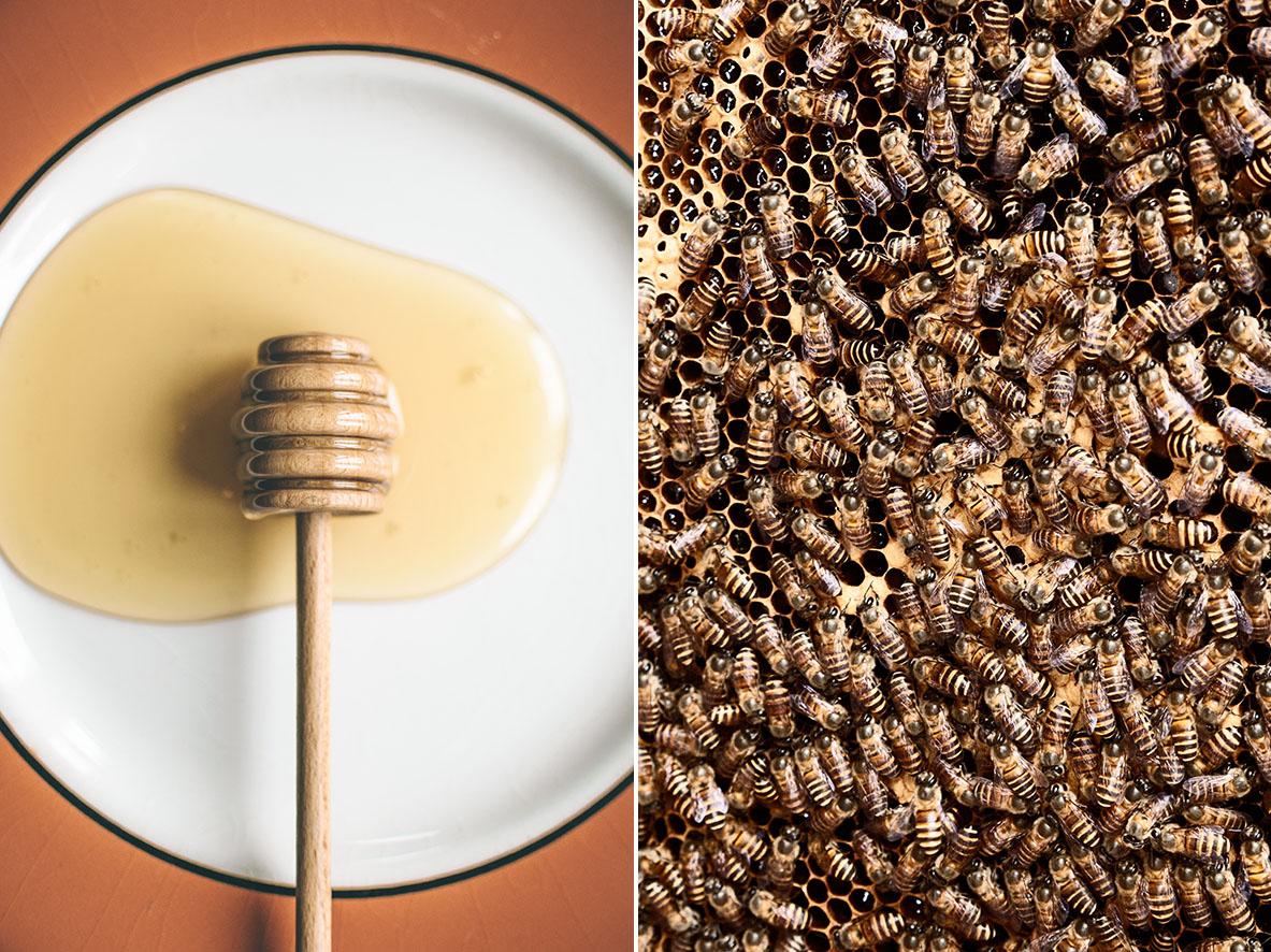 Honigglas | Honigbienen | chestnutandsage.de