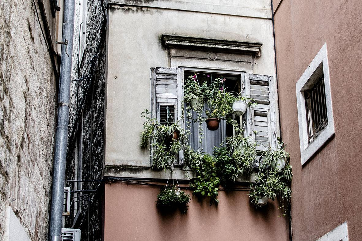 Fenster mit Grünlilien | chestnutandsage.de