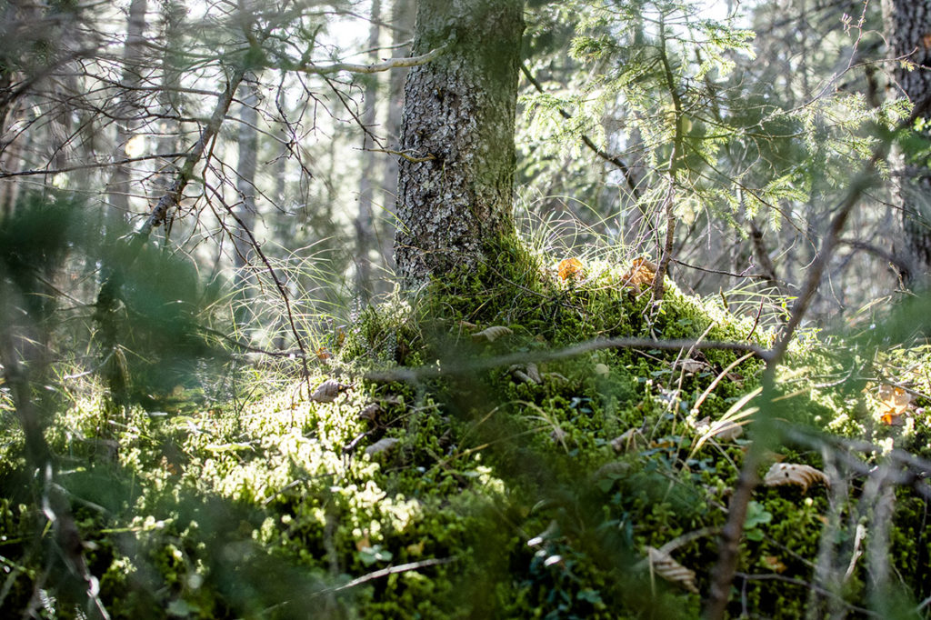Kranzbach | Wald | chestnutandsage.de